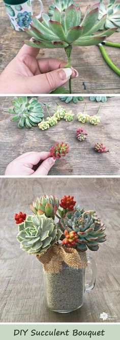 DIY Succulent Bouquet in Mason Jar Mugs! These simple bouquets are living and long-lasting! After 4-6 weeks, as the succulents outgrow the arrangement, simply take the stems apart and root them and grow them for years! :) These make wonderful DIY gifts for teachers, hostess gifts and more! Pin now, read later.