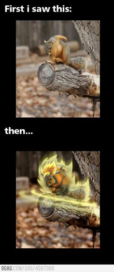 vegeta! what does the scouter say about the squirrel's power level??????!!!!!!!!!