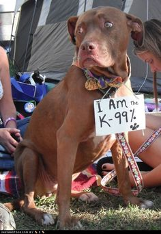 Occupy Dog Treat