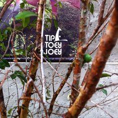 Jaboticaba Tree!!!
