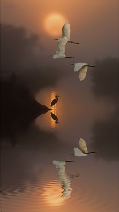 ~~Dream | egrets and water reflections in a surreal world | by Nasser Osman~~
