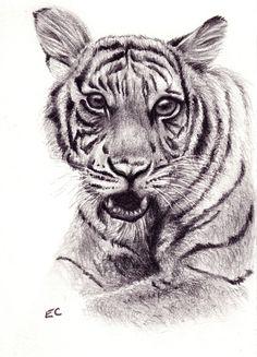 Tiger Art Print