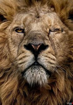 """Its too hard to make a Lion Angry... He really doesn't care what others do around him... but if you do hurt His PRIDE... He wont let you live another Day""  ― Indrani Biswas"