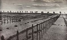 Neuville-Saint-Vaast German Cemetery before the Second World War.