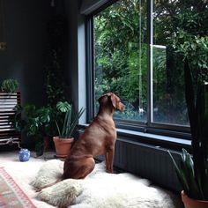 puppy at the window - (via vija rhodes @vijarhodes squirrelsInstagram photo | Websta)