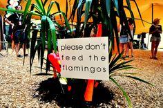 ... Letter Board, Flamingo, Lettering, Vip, Club, Flamingo Bird, Flamenco, Calligraphy, Letters