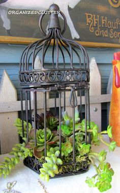 Organized Clutter: bird cage used as a planter with succulents