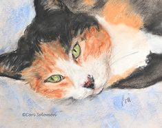 The Rainbow Bridge Claims Our Cat Milly by guest writer Mary McGrath.