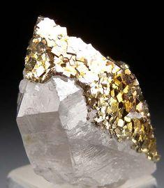 Pyrite on Quartz from Panasquiera Mine, Barroca Grande, Beira Baxia, Portugal Minerals And Gemstones, Rocks And Minerals, Natural Gemstones, Cool Rocks, Beautiful Rocks, Mineral Stone, Rocks And Gems, Crystal Healing, Quartz Crystal