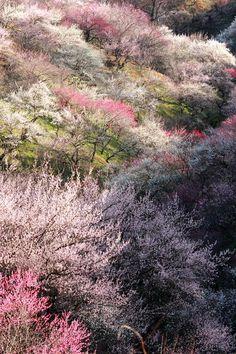 Lovely Kirschbl te im Japan Garten Pinterest Photos and Garten