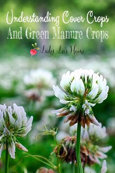 Let's try to organize and understand the topic of cover crops and green manure crops. What are cover crops, the benefits, the methods, how to, and more. #LadyLee'sHome