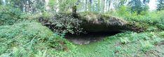 Iida urked - Kuimetsa koopad Plants, Plant, Planets
