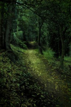 Dark forest path - Speak 'friend' and enter. Forest Path, Deep Forest, Forest Trail, Forest Road, Conifer Forest, Night Forest, Beautiful World, Beautiful Places, Beautiful Forest