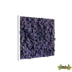 Tableau végétal stabilisé Kandi Purple 40x40cm 100