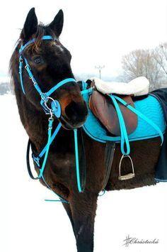 Bay Black Horse Blue Green Aqua Teal Turquoise English Close Contact All Purpose Tack Stallion Gelding Mare Cute Horses, Pretty Horses, Horse Love, Beautiful Horses, Animals Beautiful, Bay Horse, Horse Gear, Horse Tips, English Riding