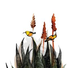 Sunbirds in the Aloe Limited Edition Art Print by katcameron
