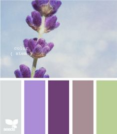 Purple and green! Love! Baby's room..guest room...time to go shopping! :)