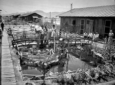 1943 photo by George Watson. June 6, 1943: Garden planted between barricks at Poston War Relocation Center for Japanese-Americans in Arizona