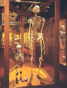 """This image often accompanies articles about ancient giants or """"Nephilim"""". The skeleton in the photo is NOT of a giant, it's a """"normal"""" sized human! It's displayed as a comparison skeleton for the tiny skeleton of the """"dwarf"""" Mary Ashberry Unexplained Mysteries, Ancient Mysteries, Ancient Artifacts, Ancient Aliens, Ancient History, Human Giant, Giant People, Tall People, Black People"""