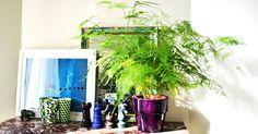 The-Frenchy-Juice---plantes-depolluantes-640