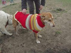 Selbst gestrickte Hunde Pullover Pulli