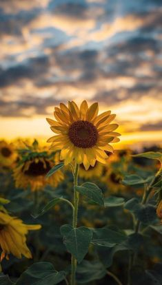 Android Wallpaper - Sunflower wallpaper android - My CMS Wallpaper Pastel, Iphone Wallpaper Vsco, Sunflower Wallpaper, Homescreen Wallpaper, Sunset Wallpaper, Iphone Background Wallpaper, Aesthetic Pastel Wallpaper, Aesthetic Backgrounds, Cellphone Wallpaper