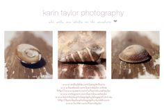 karin taylor photography: she sells sea shells by the seashore