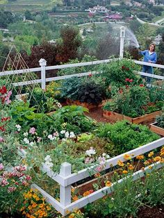 6 Brilliant Clever Tips: Vegetable Garden Planters Side Yards vegetable garden layout beginner.Pallet Vegetable Garden How To Make vegetable garden planters raised beds.Starting A Vegetable Garden How To Grow. Small Vegetable Gardens, Vegetable Garden Design, Vegetable Gardening, Veggie Gardens, Terraced Vegetable Garden, The Secret Garden, Raised Garden Beds, Raised Beds, Fenced Garden