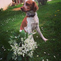 1st may ! Baby dog va au muguet hapiness
