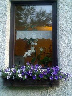 blau weiße Petunien Windows, Painting, Petunias, Trees, Garten, Painting Art, Paintings, Paint, Draw