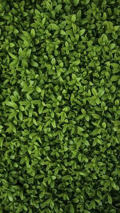 Ideas Grass Wallpaper Iphone Nature Leaves For 2019 Tumblr Iphone Wallpaper, Trendy Wallpaper, New Wallpaper, Mobile Wallpaper, Cute Wallpapers, Wallpaper Backgrounds, Pattern Wallpaper, Green Leaf Wallpaper, Leaves Wallpaper