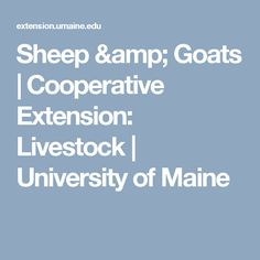 Sheep & Goats   Cooperative Extension: Livestock   University of Maine