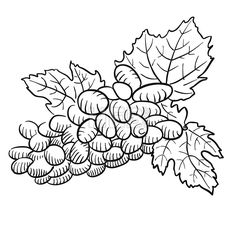 Sketched Grapes with Leaves, Black and White