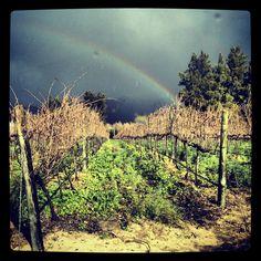 #rainbow #winter #winelands Iphone Pics, Natural Scenery, Lp, Vineyard, Landscapes, Rainbow, Wine, World, Places
