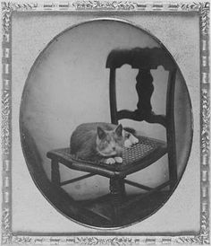 """The cat, who had been a puzzled observer of these unusual movements, jumped up into Zeena's chair, rolled itself into a ball, and lay watching them with narrowed eyes."""