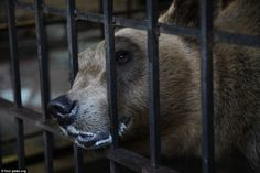 So sad: Tomi spent two years trapped in a tiny concrete prison after being taken from the ...