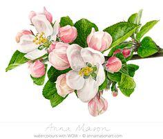 "Apple Blossom © 2011 ~ annamasonart.com ~ 41 x 31 cm (16"" x 12"")"