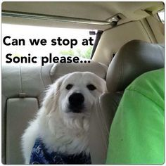 great pyrenees memes - Google Search