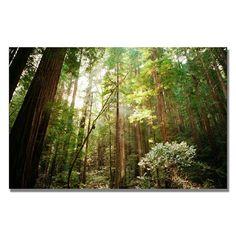 """Muir Woods"" by Ariane Moshayedi Photographic Print on Canvas"