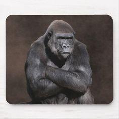 gorilla (photo by Debi Dalio). Tiring of the photo shoot, this male western lowland gorilla strikes a pose to show his displeasure. Gorilla Gorilla, Silverback Gorilla, Primates, Mammals, Animals And Pets, Funny Animals, Cute Animals, Beautiful Creatures, Animals Beautiful