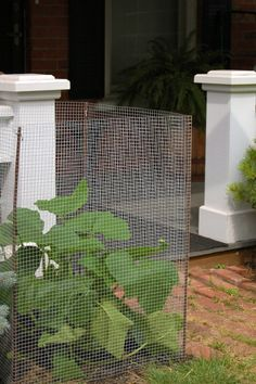 How to make a garden vegetable cage http://www.theartofdoingstuff.com/vertical-gardeningmake-the-most-of-your-space-with-a-vegetable-cage/