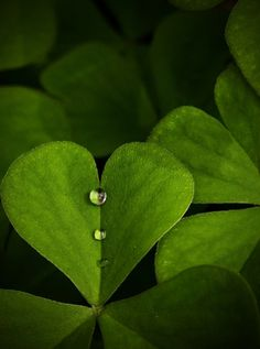 Green Leaf Hearts