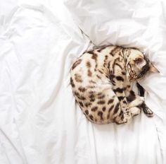 вот такими должны быть  фотки для продажи котят