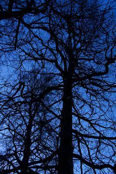 Drottningholm view-tree | Flickr - Photo Sharing!