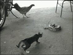 What do you get when you cross a cat a chicken and a snake?  THIS...
