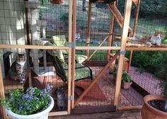 catios for cats | Catios: A Safe Fully Enclosed Outdoor Playground for Cats