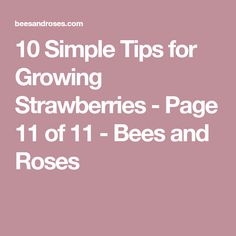 10 Simple Tips for Growing Strawberries - Page 11 of 11 - Bees and Roses