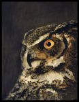 Great Horned Owl by lost-nomad07