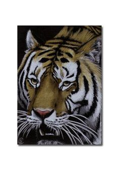 TIGER 27 portrait big cat feline pencil painting Sandrine Curtiss Art Limited Edition Print ACEO by Sandrinesgallery