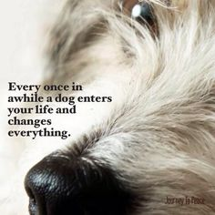 Dog Grief, West Highland Terrier, Best Friends Forever, Great Love, Westies, Four Legged, Dog Art, Cute Pictures, Cute Animals